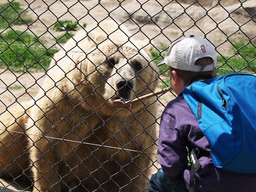 Etetik a gyerekek a macikat a Veresegyházi Medveparkban