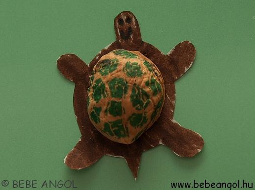teknős dióból